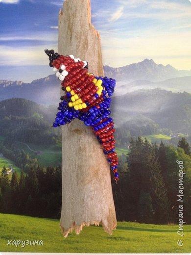 Попугай фото 3