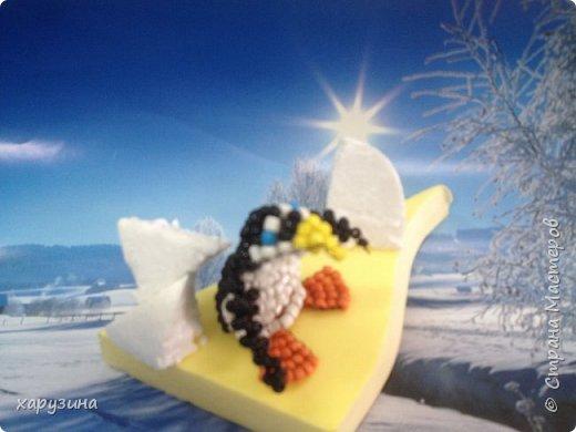 Пингвины фото 4