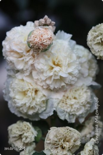 Добрый день, уважаемые жители СМ. Продолжаю выкладывать фото своего сада. Главная героиня сегодняшнего фоторепортажа - шток-роза. фото 8