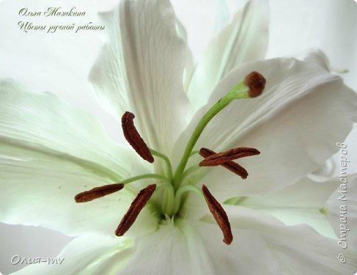 Настал мой черед попробовать слепить лилию. Спасибо заказчице, сама бы я до нее не скоро  дошла:)  фото 1