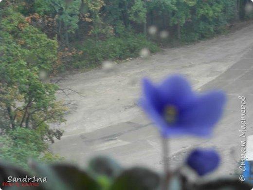 Фоторепортаж Мои фантазии (цветы) фото 4