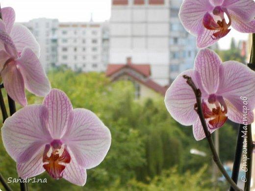 Фоторепортаж Мои фантазии (орхидеи) (1) фото 1