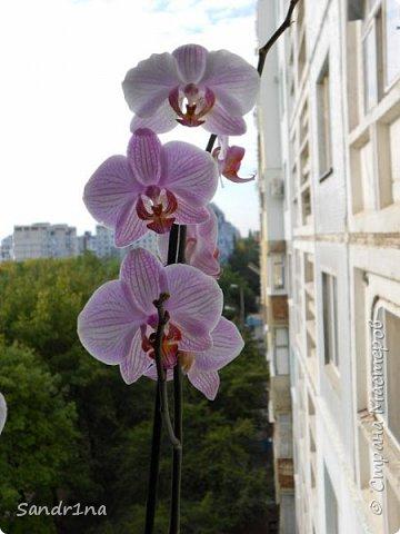 Фоторепортаж Мои фантазии (орхидеи) (1) фото 4