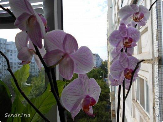 Фоторепортаж Мои фантазии (орхидеи) (1) фото 2
