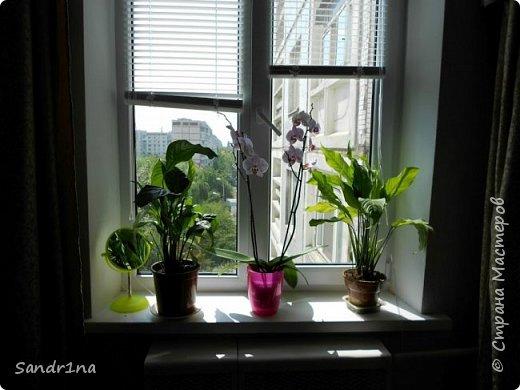 Фоторепортаж Мои фантазии (цветы) фото 9