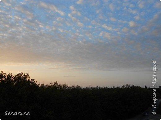 Фото. Мои фантазии (Наш лес и я ) фото 28