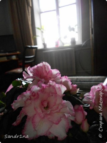 Фоторепортаж Мои фантазии (цветы) фото 8
