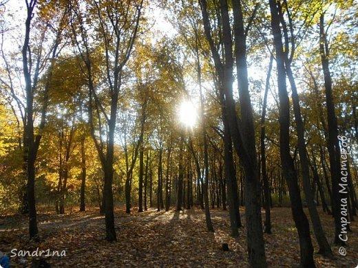 Фото. Мои фантазии (Наш лес и я ) фото 2
