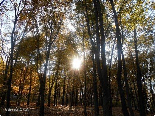 Фото. Мои фантазии (Наш лес и я ) фото 1