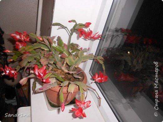 Фоторепортаж Мои фантазии (цветы) фото 11