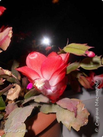 Фоторепортаж Мои фантазии (цветы) фото 12