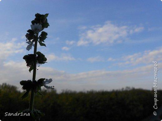 Фоторепортаж Мои фантазии (цветы) фото 14