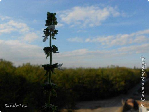 Фоторепортаж Мои фантазии (цветы) фото 13