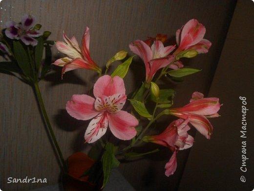 Фоторепортаж Мои фантазии (цветы) фото 17