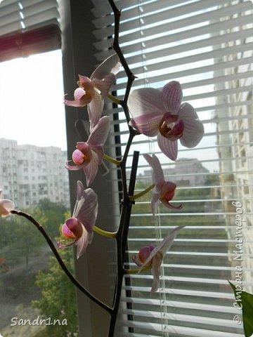 Фоторепортаж Мои фантазии (орхидеи) (2) фото 4