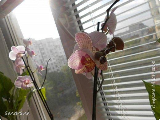 Фоторепортаж Мои фантазии (орхидеи) (2) фото 3