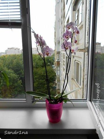 Фоторепортаж Мои фантазии (орхидеи) (1) фото 6