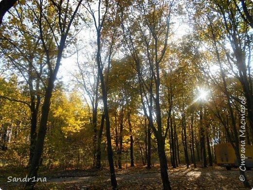 Фото. Мои фантазии (Наш лес и я ) фото 3
