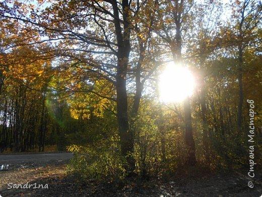 Фото. Мои фантазии (Наш лес и я ) фото 4