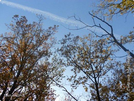 Фото. Мои фантазии (Наш лес и я ) фото 7