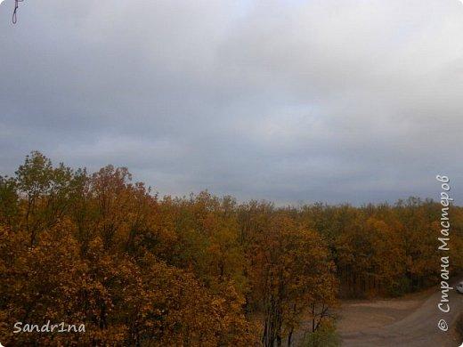 Фото. Мои фантазии (Наш лес и я ) фото 9