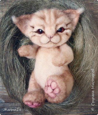 Кот фото 1