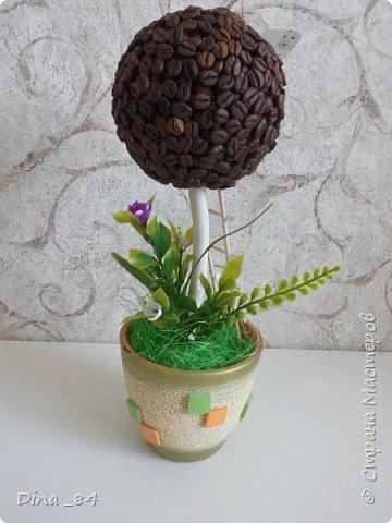 Кофейные топиарии. фото 11