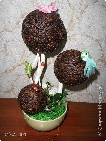 Кофейные топиарии. фото 4