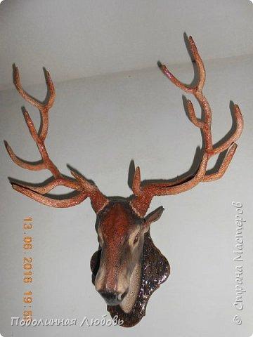 Моя давняя хотелка, и показательная работа в моем кружке. Голова оленя почти в натуральную величину. Высота модели 65 см, размах рогов - 62 см. фото 3