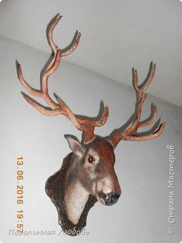 Моя давняя хотелка, и показательная работа в моем кружке. Голова оленя почти в натуральную величину. Высота модели 65 см, размах рогов - 62 см. фото 5