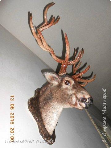 Моя давняя хотелка, и показательная работа в моем кружке. Голова оленя почти в натуральную величину. Высота модели 65 см, размах рогов - 62 см.