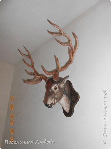 Моя давняя хотелка, и показательная работа в моем кружке. Голова оленя почти в натуральную величину. Высота модели 65 см, размах рогов - 62 см. фото 7