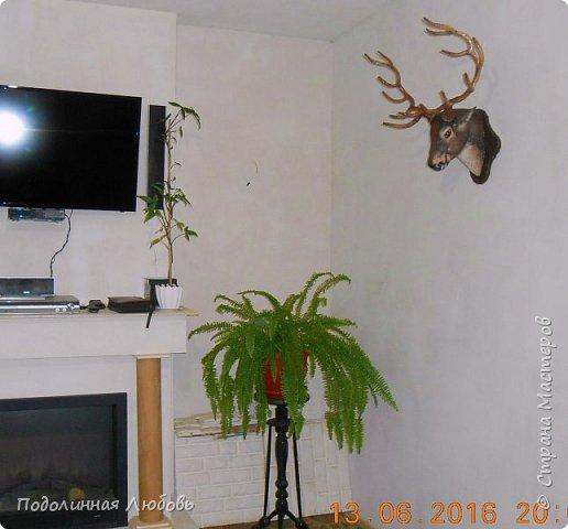 Моя давняя хотелка, и показательная работа в моем кружке. Голова оленя почти в натуральную величину. Высота модели 65 см, размах рогов - 62 см. фото 6