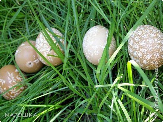 фотосессию скорлупкам решила устроить летнюю - на траве... способ нанесения рисунка - гравировка фото 1