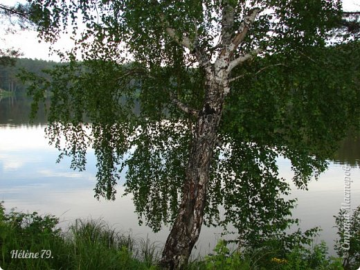 Летний вечер тих и ясен; Посмотри, как дремлют ивы; Запад неба бледно-красен, И реки блестят извивы.  От вершин скользя к вершинам, Ветр ползет лесною высью...  (А. Фет)  фото 4