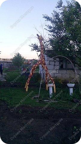 Добрый день! А у нас в саду появился такой большой, высокий,красивый жираф!  Делали его совместно-папа выпиливал,а я,мама,брат красили.   У нас росла высокая ива,которая начала подсыхать,и мы придумали сделать существо! Папа очень долго работал над шеей и головой,ведь это был ствол,а ноги-ветки! фото 2