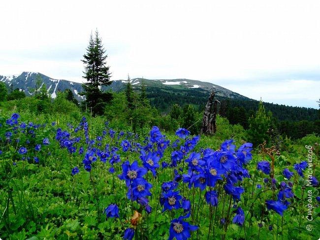 Это Иоанн Кронштадтский, святой праведник, сказал, что цветы – остатки рая на земле. И разве нельзя назвать райским местом этот родник в Бешпельтирском логу? У нас, в Горном Алтае, такая красота повсюду. И я приглашаю вас на неспешную прогулку по цветущему Алтаю. фото 75