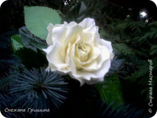 Здравствуйте дорогие жители Страны Мастеров!!! Пока цветут цветы в саду,я сделаю несколько разборов по цветам!! Я часто ищу разборы по цветам,и может мои цветы кому нибудь пригодятся!! Сегодня вашему вниманию я представляю розу Николь фото 19
