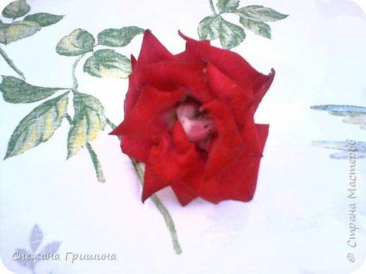 Здравствуйте дорогие жители Страны Мастеров!!! Пока цветут цветы в саду,я сделаю несколько разборов по цветам!! Я часто ищу разборы по цветам,и может мои цветы кому нибудь пригодятся!! Сегодня вашему вниманию я представляю розу Николь фото 1