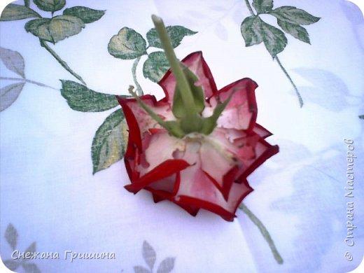 Здравствуйте дорогие жители Страны Мастеров!!! Пока цветут цветы в саду,я сделаю несколько разборов по цветам!! Я часто ищу разборы по цветам,и может мои цветы кому нибудь пригодятся!! Сегодня вашему вниманию я представляю розу Николь фото 2
