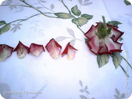 Здравствуйте дорогие жители Страны Мастеров!!! Пока цветут цветы в саду,я сделаю несколько разборов по цветам!! Я часто ищу разборы по цветам,и может мои цветы кому нибудь пригодятся!! Сегодня вашему вниманию я представляю розу Николь фото 3
