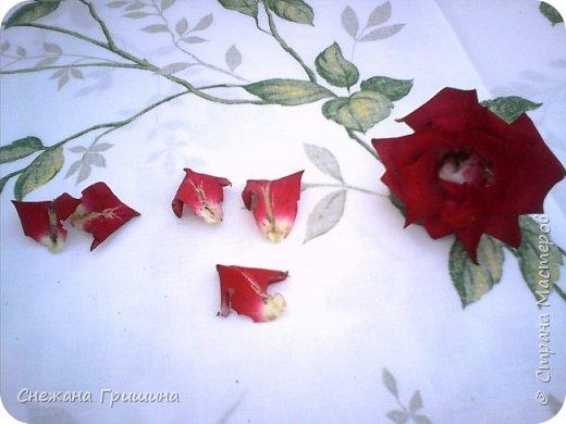 Здравствуйте дорогие жители Страны Мастеров!!! Пока цветут цветы в саду,я сделаю несколько разборов по цветам!! Я часто ищу разборы по цветам,и может мои цветы кому нибудь пригодятся!! Сегодня вашему вниманию я представляю розу Николь фото 4