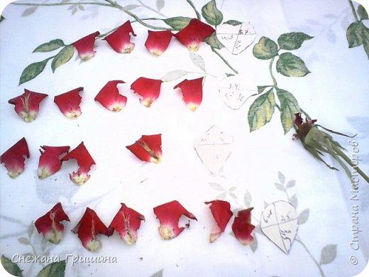 Здравствуйте дорогие жители Страны Мастеров!!! Пока цветут цветы в саду,я сделаю несколько разборов по цветам!! Я часто ищу разборы по цветам,и может мои цветы кому нибудь пригодятся!! Сегодня вашему вниманию я представляю розу Николь фото 5