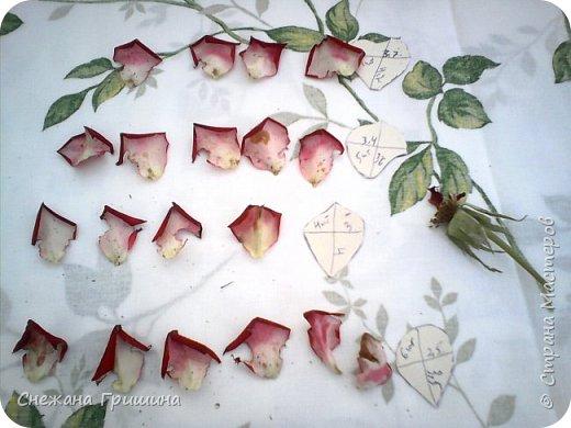 Здравствуйте дорогие жители Страны Мастеров!!! Пока цветут цветы в саду,я сделаю несколько разборов по цветам!! Я часто ищу разборы по цветам,и может мои цветы кому нибудь пригодятся!! Сегодня вашему вниманию я представляю розу Николь фото 6