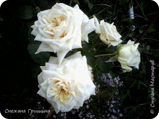Здравствуйте дорогие жители Страны Мастеров!!! Пока цветут цветы в саду,я сделаю несколько разборов по цветам!! Я часто ищу разборы по цветам,и может мои цветы кому нибудь пригодятся!! Сегодня вашему вниманию я представляю розу Николь фото 18