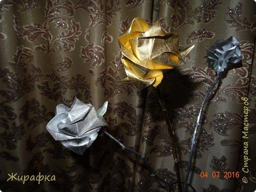 Розы Кавасаки. фото 3