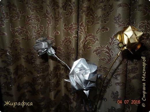 Розы Кавасаки. фото 2