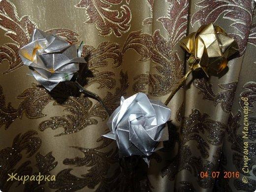 Розы Кавасаки. фото 1