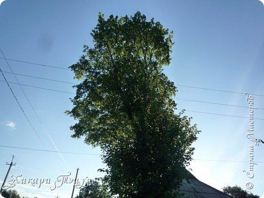 """За сегодня это мой второй блог... Итак, на часах ровно шесть утра... Я проснулась намного раньше, где-то в половине пятого, но до шести рисовала на улице, специально ждала, когда солнце взойдет немного повыше.  Я живу на Донбассе, в городе Макеевке, в Ханжонково, в поселке Фурманово...  Как известно, в Донецкой области очень много шахт, а посему и терриконов. У нас большого террикона нет, зато есть небольшие холмы. Они состоят из тех же камней, что и терриконы, только по размерам намного меньше. Самая большая высота над уровнем земли - не больше 4 метров. Мы зовем это - бугор. Да, так и зовем))) Например: """"Не ходи на бугор"""", """" Пошли на бугор"""" и т.д. На бугре очень много берез. Из них есть моя любимая))) На ней очень удобно лазить... фото 3"""