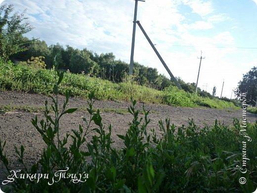 """За сегодня это мой второй блог... Итак, на часах ровно шесть утра... Я проснулась намного раньше, где-то в половине пятого, но до шести рисовала на улице, специально ждала, когда солнце взойдет немного повыше.  Я живу на Донбассе, в городе Макеевке, в Ханжонково, в поселке Фурманово...  Как известно, в Донецкой области очень много шахт, а посему и терриконов. У нас большого террикона нет, зато есть небольшие холмы. Они состоят из тех же камней, что и терриконы, только по размерам намного меньше. Самая большая высота над уровнем земли - не больше 4 метров. Мы зовем это - бугор. Да, так и зовем))) Например: """"Не ходи на бугор"""", """" Пошли на бугор"""" и т.д. На бугре очень много берез. Из них есть моя любимая))) На ней очень удобно лазить... фото 6"""